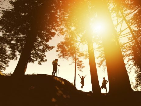 people hiking in sun lit forest